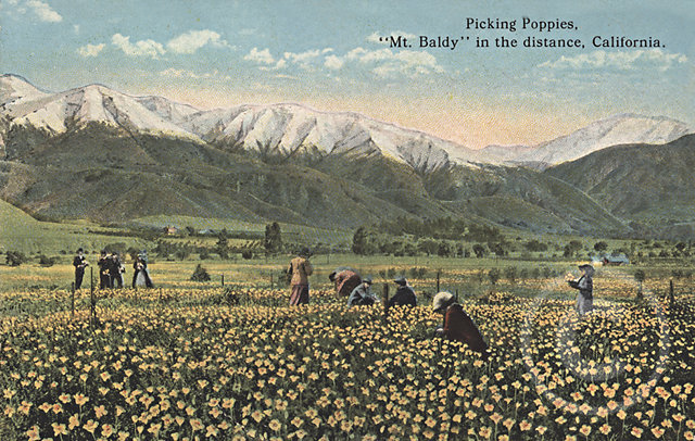 PickingPoppies.jpg